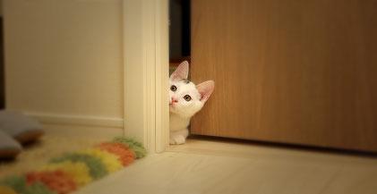 Katze schaut niedlich in den anderen Raum