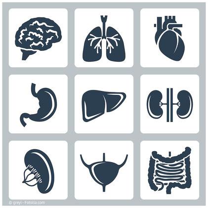 In welchen Organen und Geweben Quecksilber aus Amalgamfüllungen sich abspeichert. (© greyi - Fotolia.com)