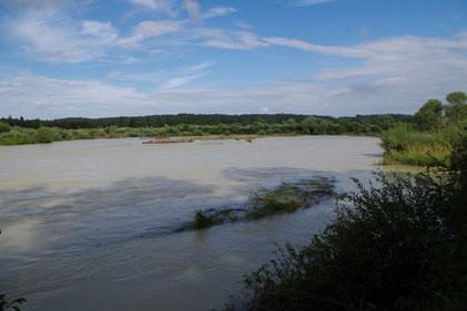 Komplett überfluteter Wiederansiedlungs-Standort am 28.07.2017 bei einem Abfluss von ca. 200 m³/s, Foto:  Fabian Unger