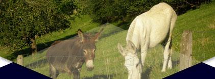 eselhuf.ch - der Eselhuf-Spezialist für die ganze Schweiz