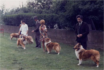 Collie show in the early years