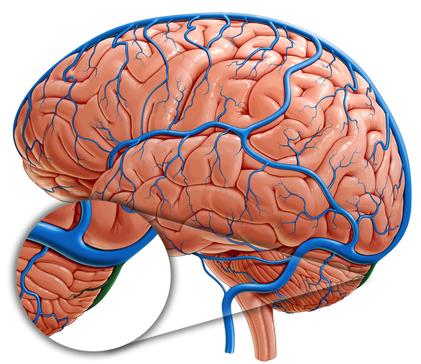 transverse sinuses