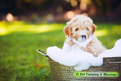 犬と上手に暮らすヒント集〜犬を迎える準備から一緒に暮らすまで