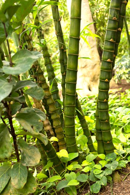 Bambus im Schmetterlingsgarten Kollektion 2017