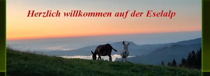 Eselpatenschaften für Esel-Fans!