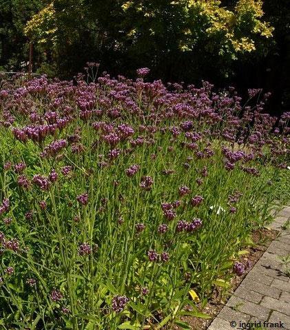 30.08.2015 - Botanischer Garten Heidelberg