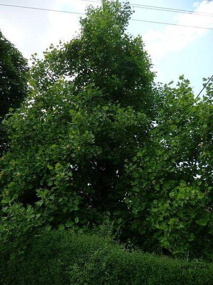 02.06.2015 - Garten im Deggenhauser Tal