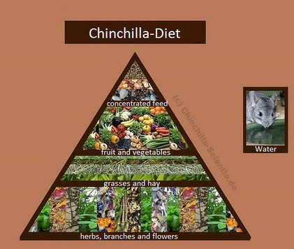 Feeding pyramid: importance of the individual feed components
