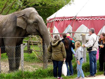 Rund 25.000 Besucher kommen jedes Jahr ins Elefantendorf.