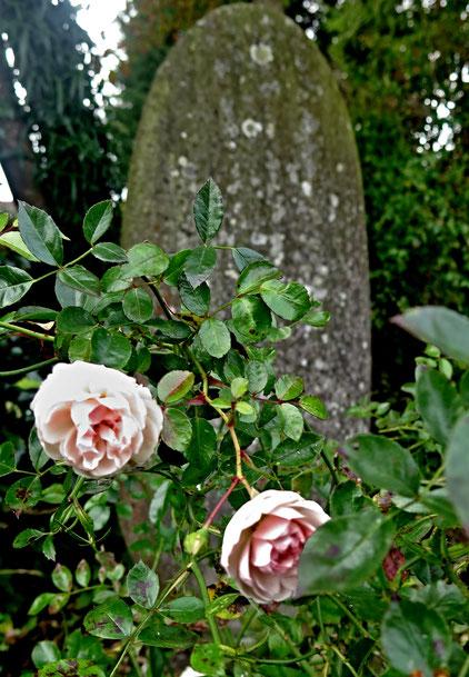 01. November 2016 - Eine Knospe fürs Leben, eine Blume fürs Grab - Allerheiligen-Allerseelen