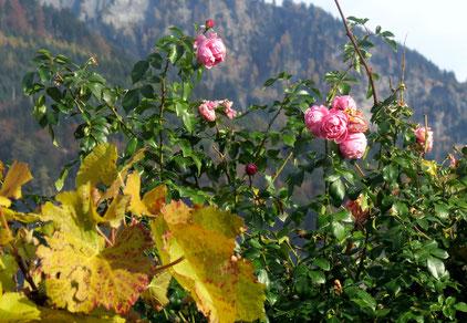 08. November 2016 - Die Weinlese ist vorbei