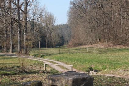 1. naturkundlicher Spaziergang entlang des Feldrennacher Baches (G. Franke)