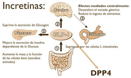 incretinas, diabetes, hormona incretina