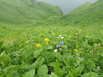 桃岩コース海側のお花畑