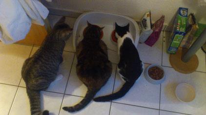 Maja, Kira und Mia
