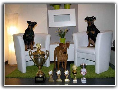 Erfolgreiche Landessieger Show 2011 - 3 x Landessieger + Shila BIS3, BIS Veteran