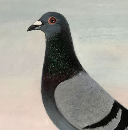 J Browne oil portrait of a racing pigeon