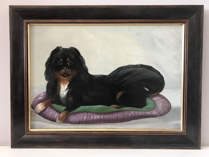 Spaniel seated on a cusion