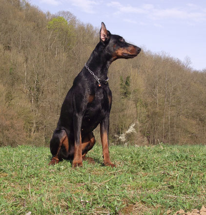 Klick auf Foto für Neos Working-Dog Profil