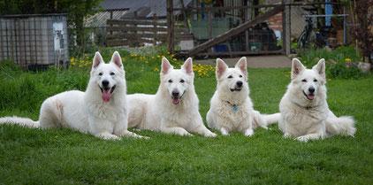 Ben, Rico, Aisha und Balika
