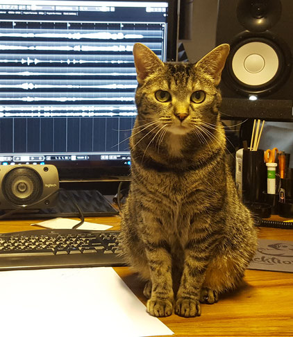picture of my cat milly visiting the a cappella studio
