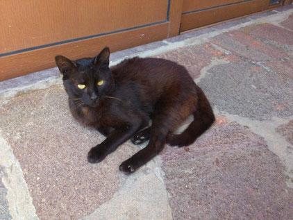 Die Homöopathie und eine gesunde Ernährung bieten gute Chancen, Arthrose bei Katzen zu heilen.