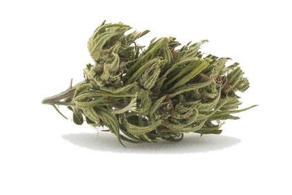 Cannabis Light - Fenix Plus