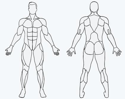 Musclewiki Muskel Wikipedia