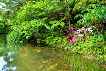 101 沖縄/ビオスの丘