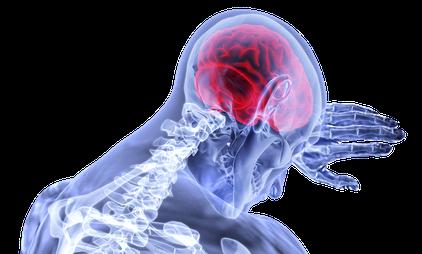 Neuronale Vernetzungen und Erlebnisnetzwerke werden umstrukturiert - Muster werden aufgelöst