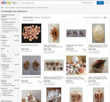 Ebay è uno dei migliori modi per acquisire conchiglie sul web.