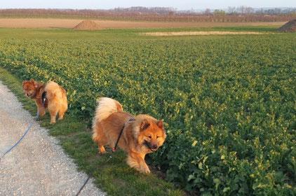 Bia und Ronja beim Spaziergang in der Morgensonne