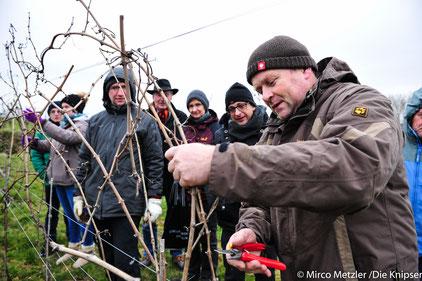 Das Weingut Heck plant, einen Wingert mit bloßer Handarbeit zu bearbeiten, sodass am Ende ein Riesling mit besserer Qualität produziert werden kann.