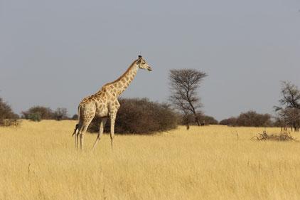 Fototourismus ist akzeptiert. Fragwürdige Fotos erlegter Tiere hingegen sorgen im Internet häufig für Kritik an der Jagd.   Quelle: Martinsohn/DJV