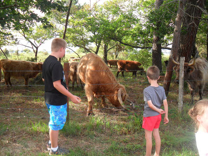 Animations camping landes