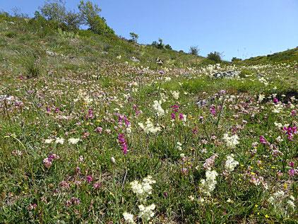 Unglaubliche Vielfalt an Blumen und Schmetterlingen...