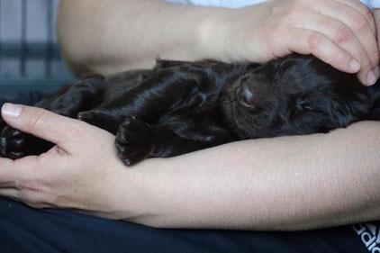 Welpen, Kleinhunde oder deutsche Dogge: Bei Daniela Elstner sind alle Hunde in guten Händen. Bild: zvg