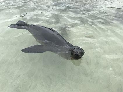 Reisen zu den Galápagos Inseln mit PERUline