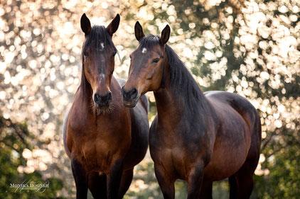 Traber, Pferdefotografie