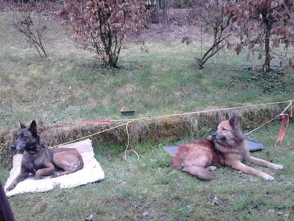 Dogtrekking Dogtrekking Dogtrekking Dogtrekking Elbsandstein-Dogtrekking ESDT Harz-Dogtrekking