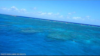 Récif coralien en péril, Australie, photo non libre de droits