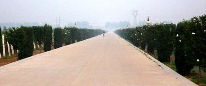 Die Avenue zum Weingut Langes