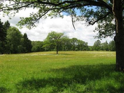 """Die """"Gernsdorfer Weidekämpe"""" hat eine große Bedeutung für den Artenschutz und gleichzeitig einen hohen landschaftlichen Reiz (Foto: Eva Lisges)"""