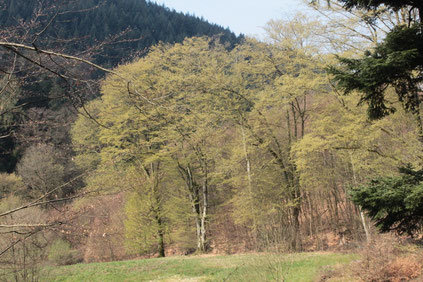 Walpertstal - andere Talseite auf dem Rückweg (G. Franke, 10.04.2016)