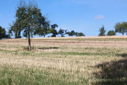 Streuobstwiesen bei Schielberg (G. Franke: 26.07.15)