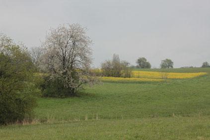 bei Pfinzweiler (G. Franke, 01.05.16)