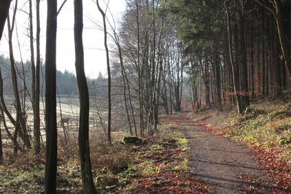 auf dem Moosalbtalweg kurz vor Moosbronn (G. Franke; Dez. 2015)