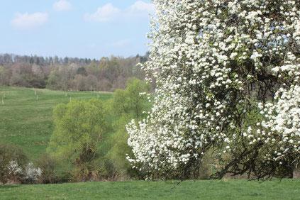 bei Pfinzweiler Naturschutzgebiet Pfinzquellen