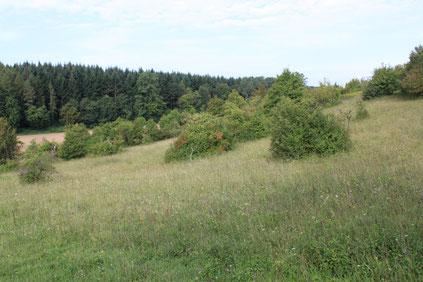 Südwesthang - Ersinger Springenhalde (G. Franke, Sept. 2009)