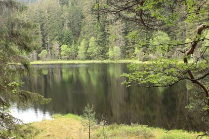 am Herrenwieser See - ein Karsee, ca. 850 m ü. NN (G. Franke, 29.05.2016)